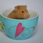 Cute Hamster 1