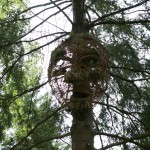 Forest Face at Glentress