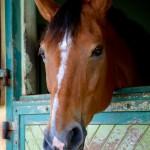 Horse at Cadre Noir