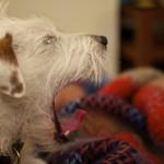 Yawny Dog