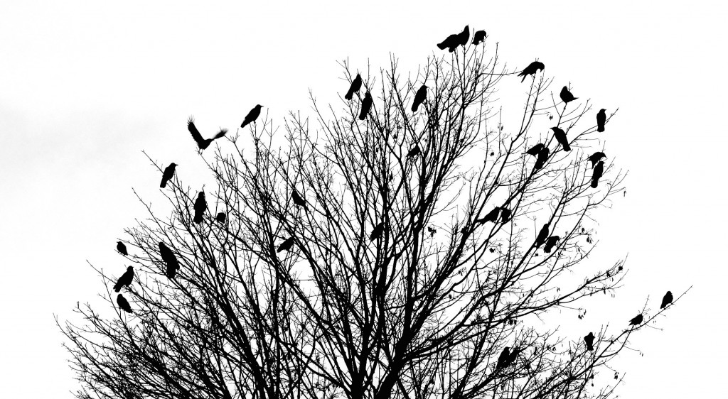 Silhouettes - Bird & Tree