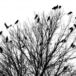 Silhouettes – Bird & Tree