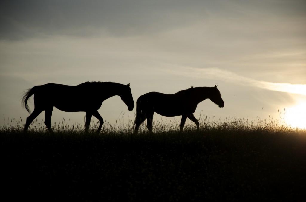 Horses near Ruberslaw