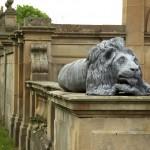 Gosford House Lion