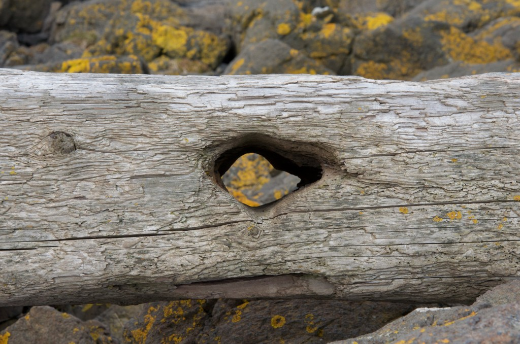 Log with hole