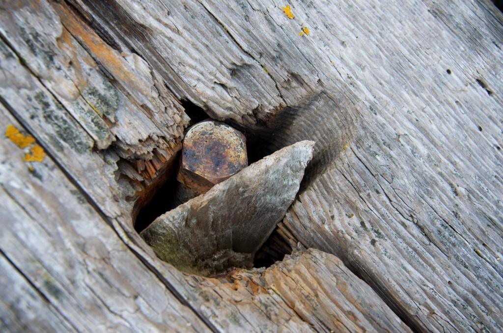 Log and screw