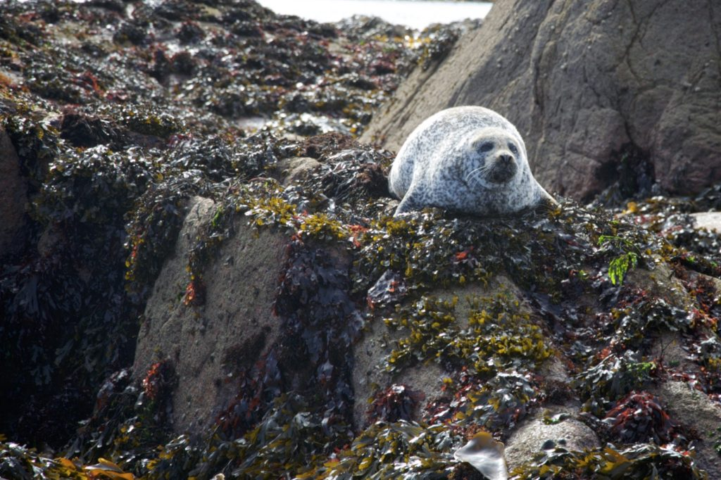 Seal view