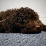 puppy-freya