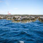 Farne Seals-1