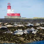 Farne Seals-3